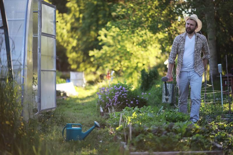 Ein Mann schleppt Gießkannen, um ein Beet zu bewässern Schwitzschlauch oder Tropfschlauch