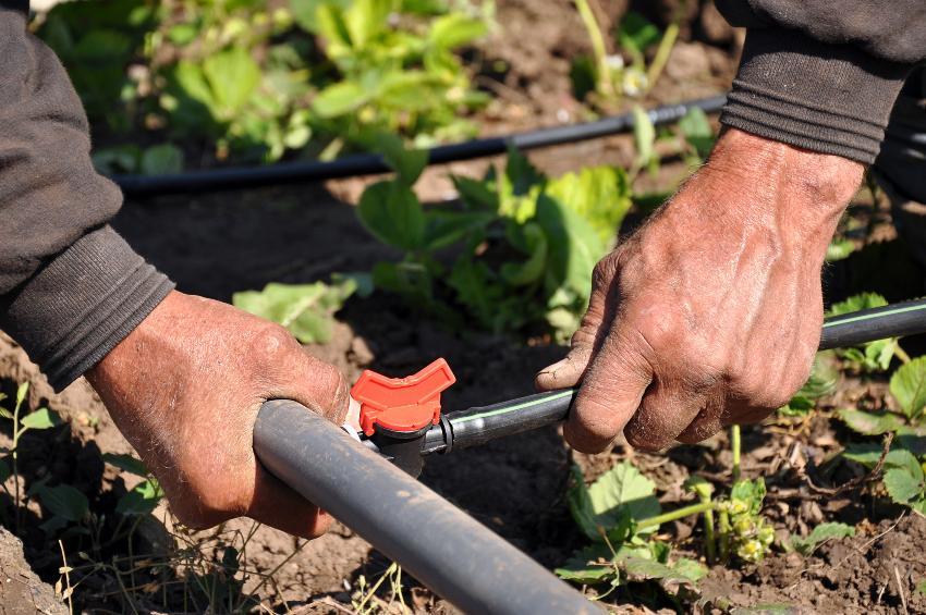 Mann installiert Gartenbewaaserungsrohre