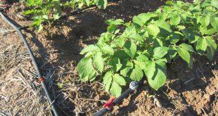 Tropbewässerung - Druckminderer schützen vor Schäden