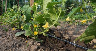 Automatische Pflanzenbewässerung