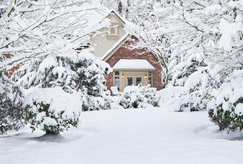 Winterlicher Garten - Formgehölze und Beerensträucher brauchen auch im Winter Wasser