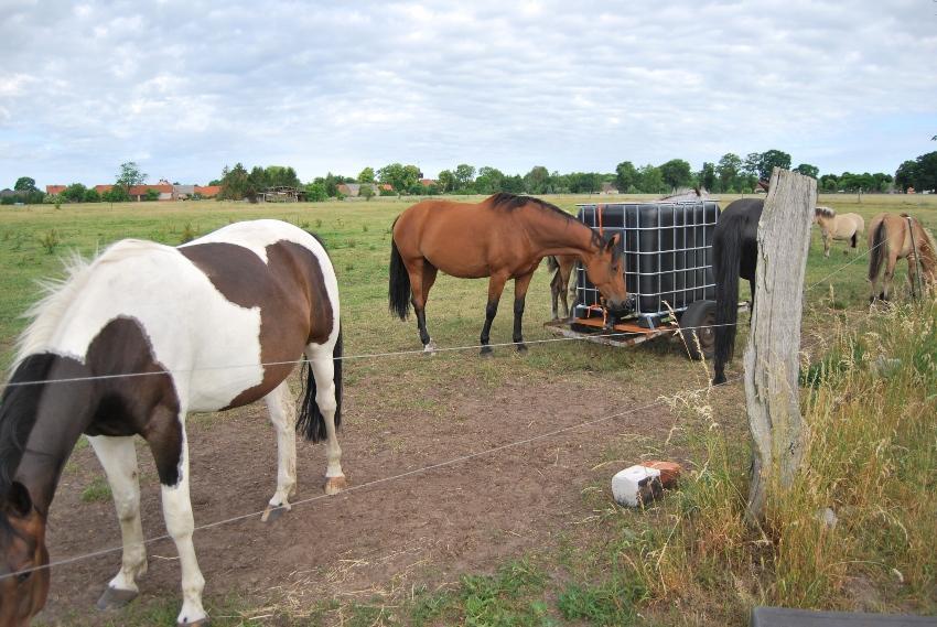 Pferden bei einem IBC mit Pferde- & Weidetränke - IBC Container für 600 Liter bis 1250 Liter