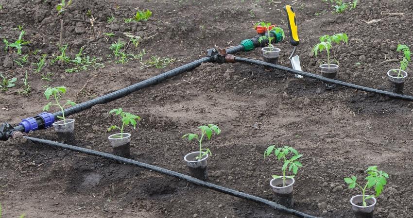 Bewässerungssystem für junge Pflanzen im Frühjahr