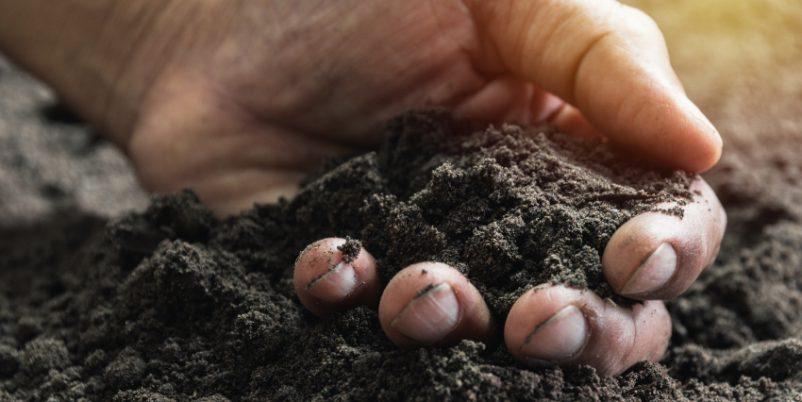 Hand fühlt Erde - Bodenfeuchtesensor misst professionell
