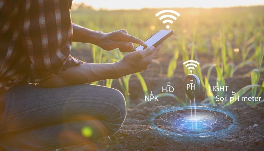 Mann mit Smart Phone kontrolliert die Pflanzen - Bodenfeuchtesensor als Hilfsmittel