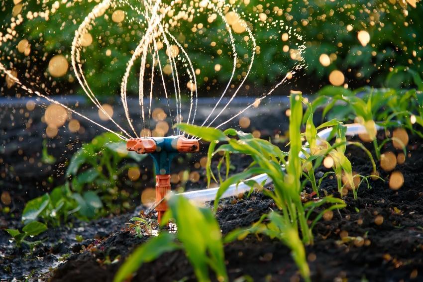 Tropfbewässerung Nahaufnahme - Tipps für den Nutzgarten