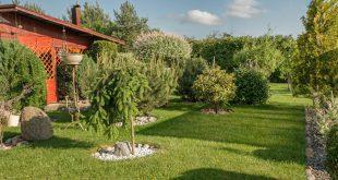 Bäume als Solitärpflanzen im Garten