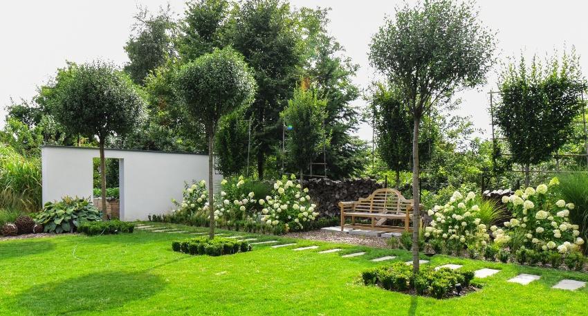 Solitärpflanzen (Bäume ) im Garten