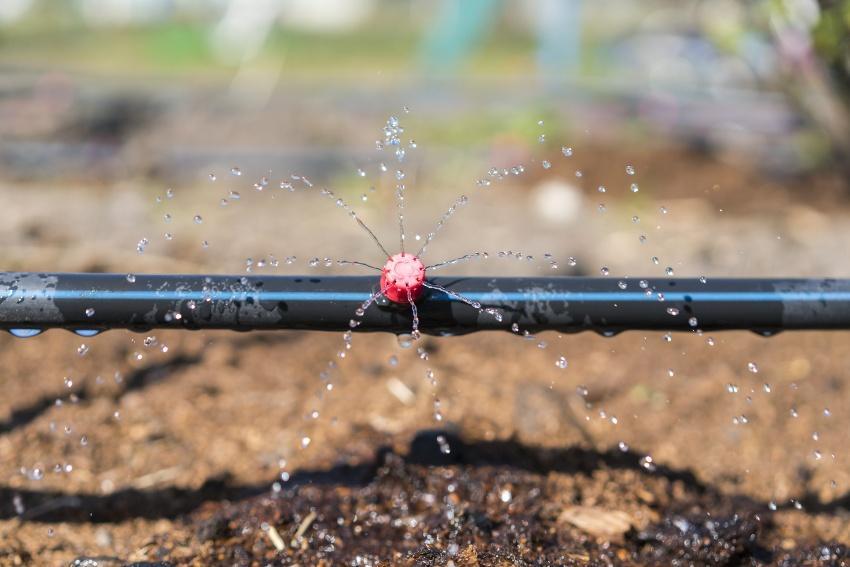 Tropfbewässerung, Nahaufnahme