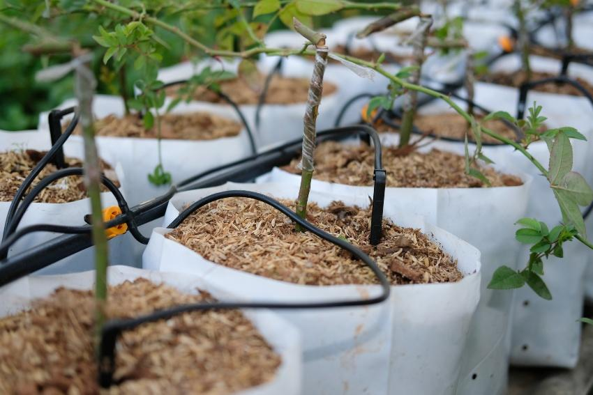 Tropfschläuche für Balkonpflanzen - praktische Balkonbewässerung