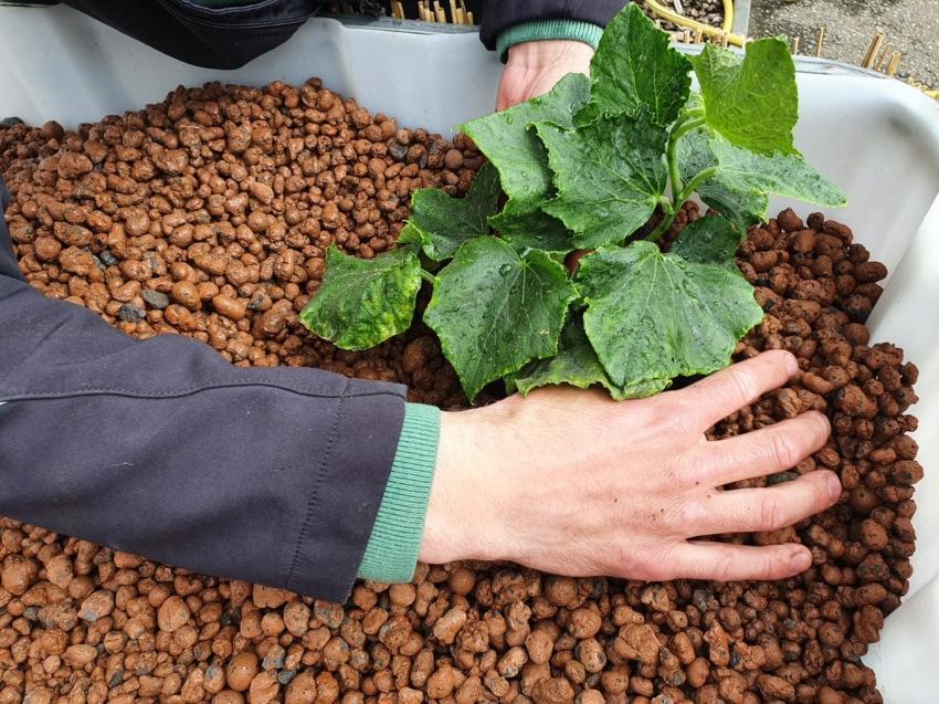 600/200l IBC KUBIKGARDEN Hochbeet Modern Farming Speicher +SET