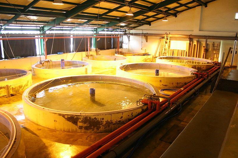 Aquakultur Kreislaufanlage - Nutzbar als Teil vom Aquaponicsystem