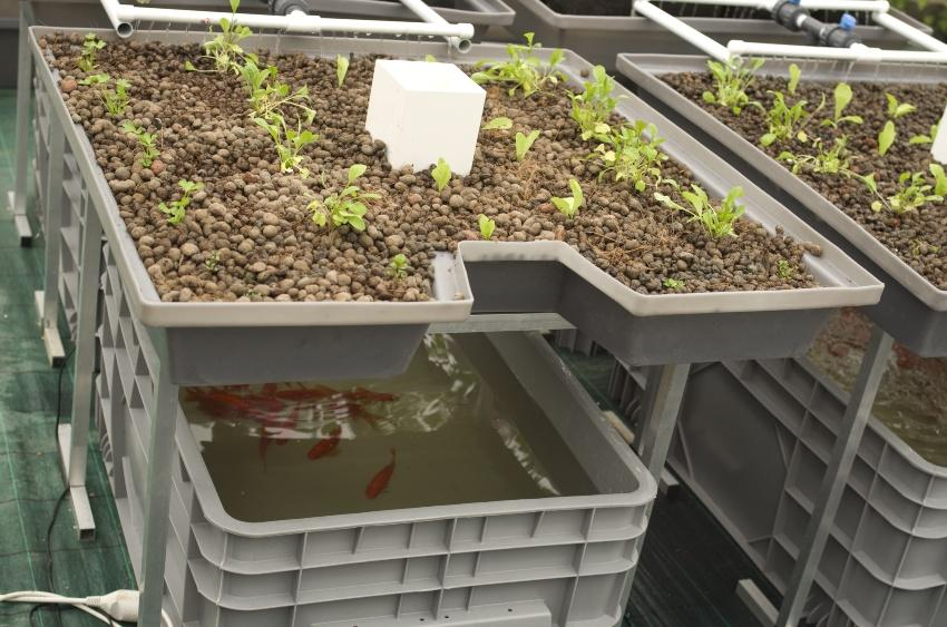 Aquaponik-Anlage - Cycle-Farming